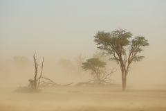 Sand storm - Kalahari desert. Landscape with trees during a severe sand storm in the Kalahari desert, South Africa Stock Photo