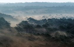 Sand storm in  Landes forest Royalty Free Stock Images
