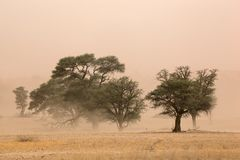Sand storm. Severe sand storm in the Kalahari desert, South Africa Royalty Free Stock Photos