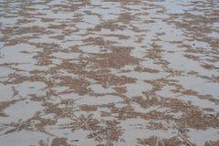 Sand-Strand durch das Meer stockbilder