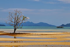 Sand strip and mangorve tree Royalty Free Stock Photography