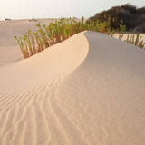 Sand surface Stock Photography