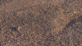 Sand Tacarigua-Lagune Lizenzfreie Stockfotografie