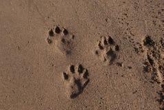 Sand tafsar Royaltyfria Bilder