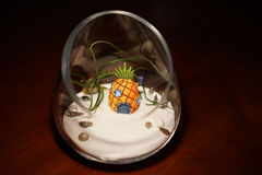 Sand terrarium with air plant and shells Stock Photo