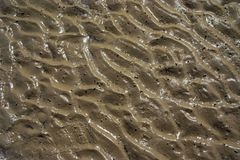 Sand texture. A sand texture on a nice sunny beach Stock Photos