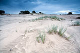 Sand texture on dunes by Appelscha Royalty Free Stock Image