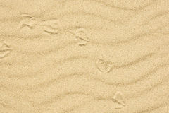 Sand texture with footprint of bird Stock Photography