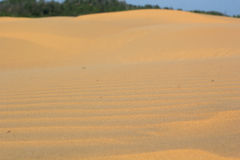 Sand texture at Phan Thiet, Vietnam Royalty Free Stock Image