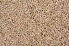 Sand texture. Sand on Baltic beach. Royalty Free Stock Image