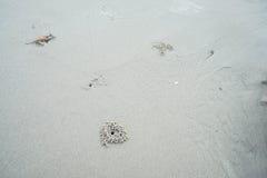 Sand texture at seashore. Close up sand texture at seashore Stock Photos