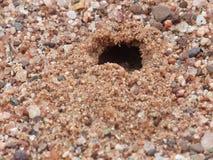 Sand Tiger Beetle Burrow. Close up of a Sand Tiger Beetle burrow stock image