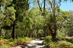 Sand trail on South Stradbroke Island in Queensland, Australia. Sand trail in rainforest on South Stradbroke Island in Queensland, Australia stock photos