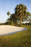 Sand Trap. On tropical golf course with palm trees Royalty Free Stock Photos