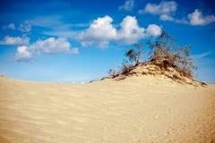 Sand And Tree stock photos