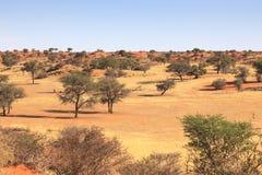 Kalahari Namibia Royalty Free Stock Photography