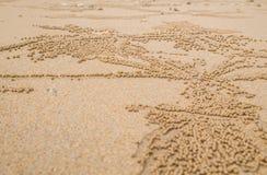 Sand-Trinkwasserbrunnen kratzt wissenschaftlichen Subfamily: Ocypode-ceratophthalmus lizenzfreie stockbilder