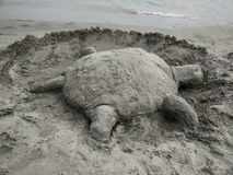 Sand Turtle by the Beach Royalty Free Stock Images