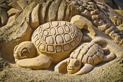 Sand turtles  Stock Images