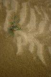 Sand-u. Pflanzen Stockfoto