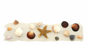 Sand u. Shells auf Weiß Stockfotos