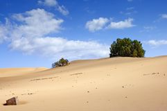Sand und Anlagen lizenzfreie stockbilder