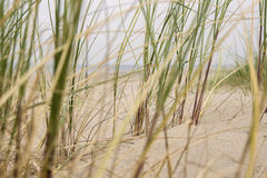 Sand und Gras in den Dünen Stockbild