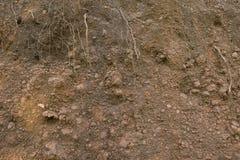 Sand vaggar textur med rotar Bakgrund Fotografering för Bildbyråer