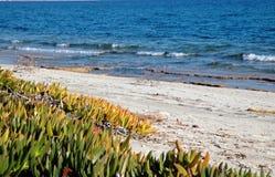 Sand vegetation Royalty Free Stock Photo