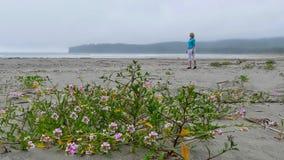 Sand Verbanas-Blumen auf dem Strand lizenzfreies stockfoto