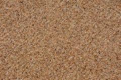 Sand von Coral Debris Lizenzfreie Stockfotos