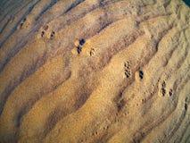 Sand. Wahiba Sand Desert, Oman, Arabic Peninsula Stock Image