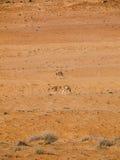 Sand. Wahiba Sand Desert, Oman, Arabic Peninsula Royalty Free Stock Images