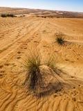 Sand. Wahiba Sand Desert, Oman, Arabic Peninsula Royalty Free Stock Photo