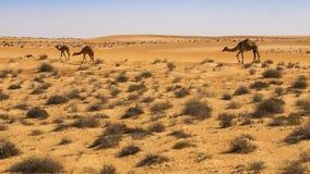 Sand. Wahiba Sand Desert, Oman, Arabic Peninsula Stock Photo