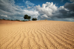 Sand wave texture on dune and beautiful sky Stock Image