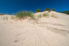 Sand waves on a dune at Curonian spit Stock Photography
