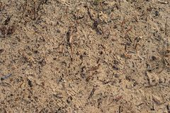 Sand and wood chips background texture royalty free stock images