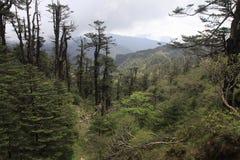 Sandakphu Trek. Trekking in majestic Himalaya mountains stock photography