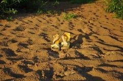 Sandalen mit Sand Stockbilder
