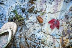 Sandalia y hoja de arce roja en una playa tóxica Fotografía de archivo libre de regalías