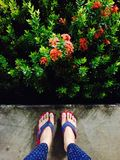 Sandalo in giardino Fotografie Stock