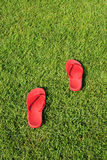 Sandalo rosso su erba verde Fotografia Stock
