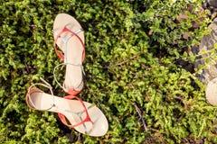 Sandals, de elegante schoenen van vrouwen in aard royalty-vrije stock foto