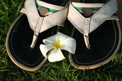 Sandals and flower. Male sandals on the green grass and white flower Stock Photo