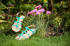 Sandals hanging on a bush, women's shoes. A Stock Photography