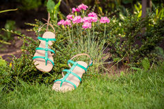 Sandals hanging on a bush, women's shoes. A Royalty Free Stock Photos