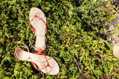 Sandals, women's elegant shoes in nature. A Royalty Free Stock Photo