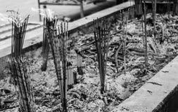 Sandalwood. Chinese to worship ancestors by burning sandalwood Stock Images