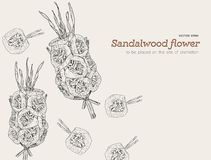 Sandalwood flowers for funeral Royalty Free Stock Photography
